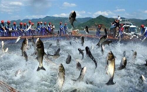 thủy hải sản Campuchia
